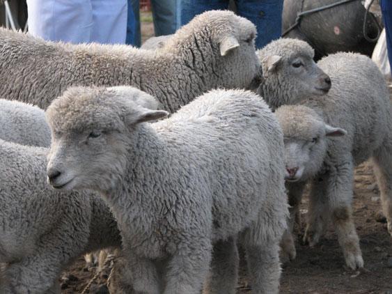 Animales de la sierra ecuatoriana
